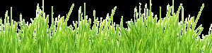 grass_PNG385